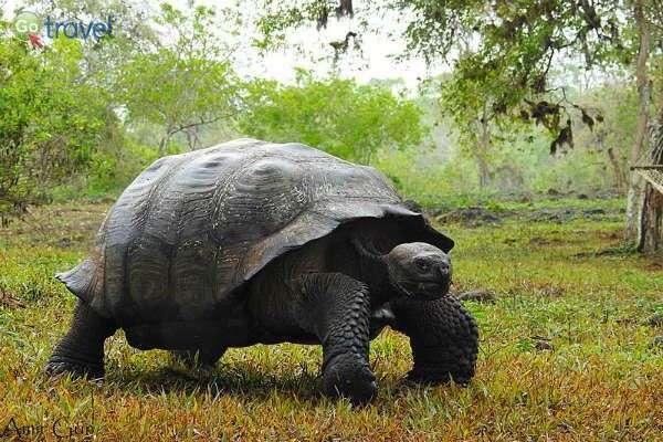 צבי הענק הם גם שיאני הגיל המופלג  (צילום: אמיר גור)