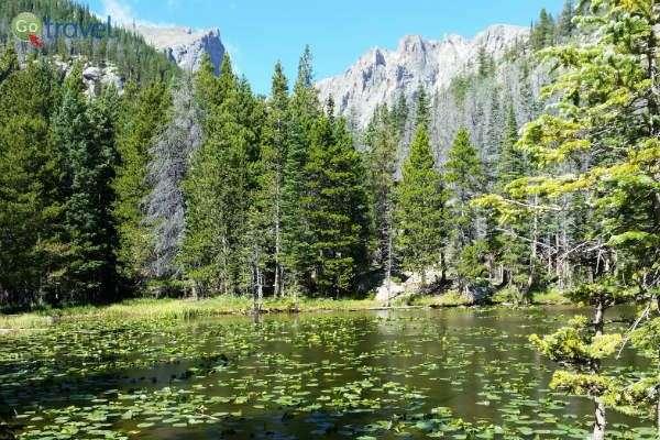 חבצלות מים מנקדות את מי אגם הנימפות (צילום: נטע קלימי)
