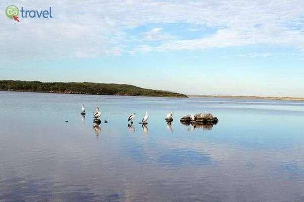 עופות מים במפרץ קוראל ביי  (צילום: יפעת סלע)
