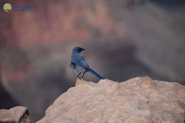 355 מיני ציפורים בגרנד קניון  (צילום: הילה וייס טישלר)