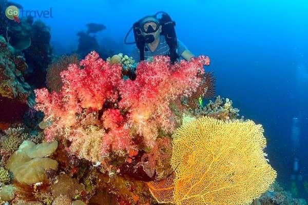 שונית האלמוגים בפלאו  (צילום: אמיר גור)