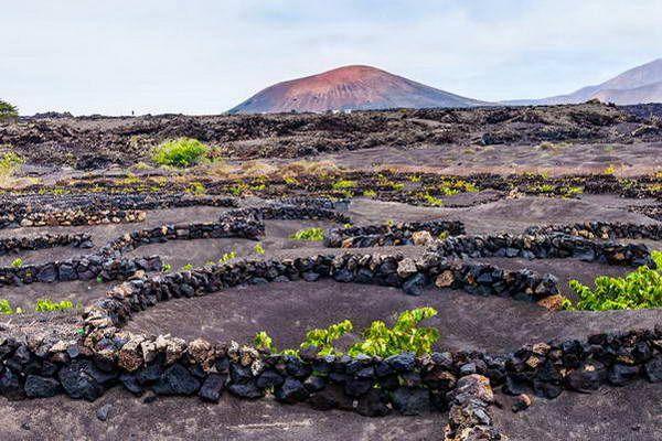 גפנים על אדמה געשית   (צילום: nrique Domingo)