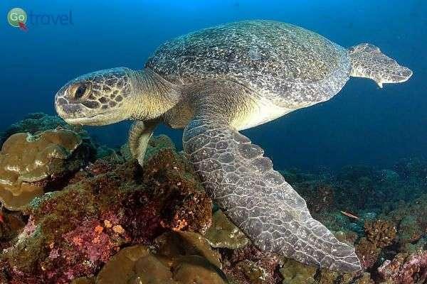 מתחת למים - שלל הפתעות ומפגשים מרתקים  (צילום: אמיר גור)