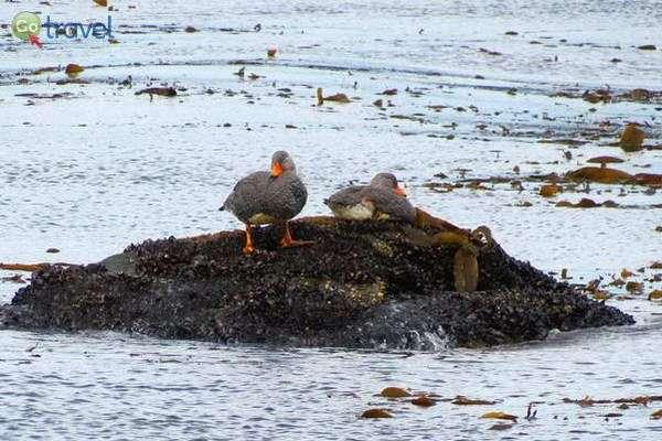 עופות מים רבים לאורך המסלול   (צילום: עופרי וייס)
