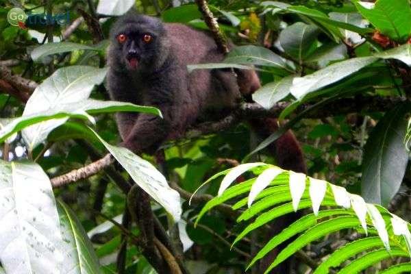 מדגסקר הוא ביתם של מיני למורים רבים (צילום: רונית הרשקוביץ)