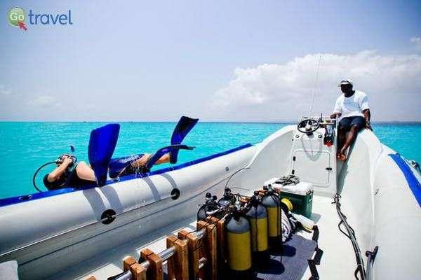 צלילות לשוניות אלמוגים  (צילום: משה שי)