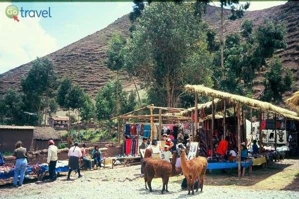 """הלמות ממתינות לבעליהן בשוק מקומי (צילום: ד""""ר רמי דברת)"""