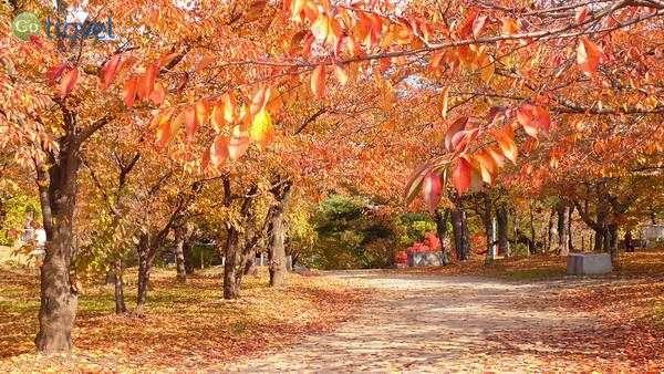 צבעי השלכת בסתיו בעיר מוריאוקה   (צילום: yisris)