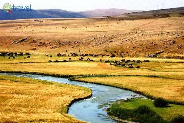 פלג קטן בלב הקווקז הנמוך ועדרי האזרים רועים בכל פינה  (צילום: גלעד תלם)
