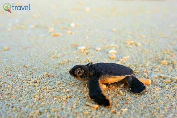 על האי צבי ים נדירים (צילום: Vazimi Island)