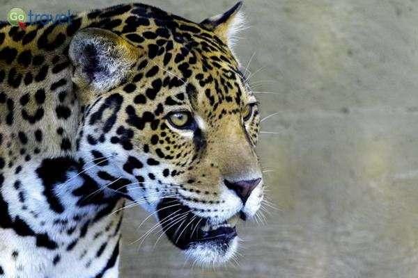 גן החיות של סן דייגו  (צילום: gsloan)