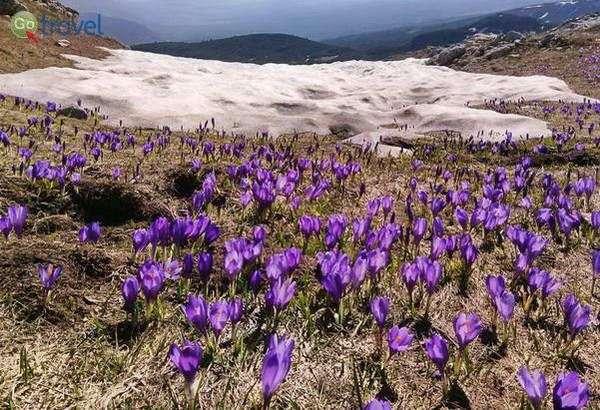 פריחה אביבית ושאריות שלג בהרי רילה (צילום: ענבל שדה)