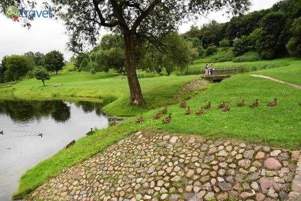 בריכות וברווזים בפארק המיסיונרי  (צילום: כרמית וייס)