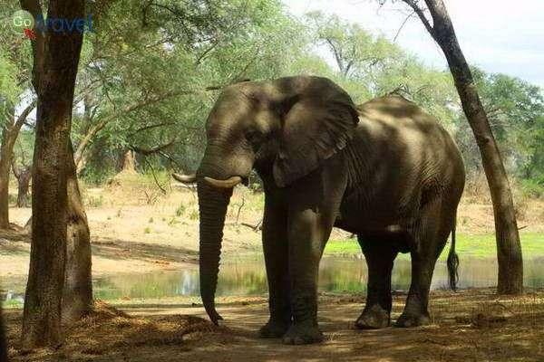 גן עדן לחובבי טבע בפארק הלאומי זמבזי תחתון  (צילום: נאור מורג)
