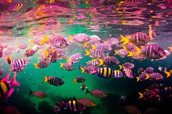 צלילה ושנירקול באיה ראייה  (צילום: Patty Ho)