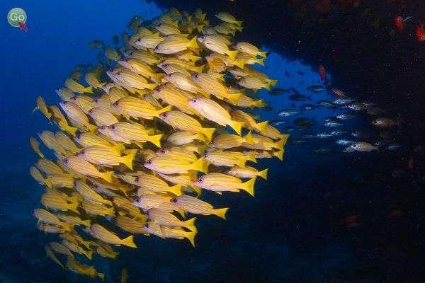 סביב האיים - טבע תת ימי משגע (צילום: אמיר גור)
