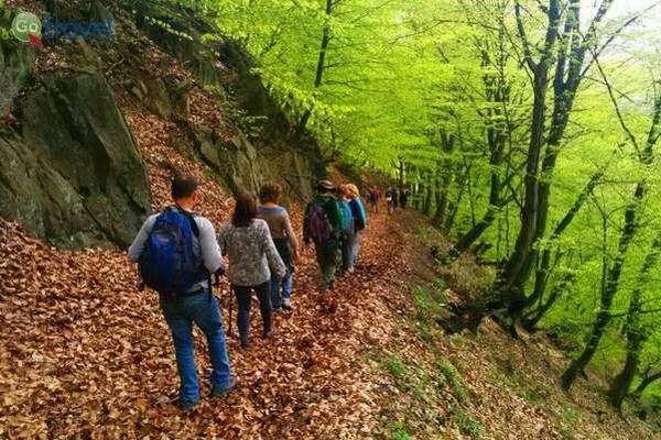 מסלול בין עצי היער (צילום: עומר בריקמן)