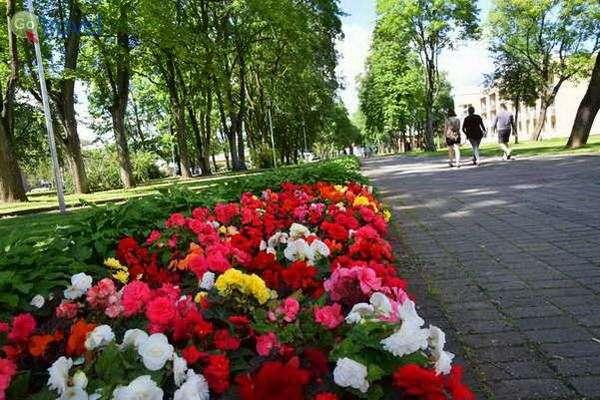 פארקים ציבוריים רבים  (צילום: כרמית וייס)