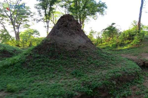קן טרמיטים עצום ממדים (צילום: פרץ גלעדי)