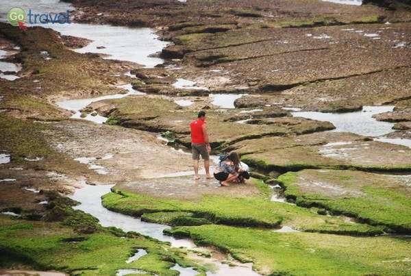 חופי פניש  (צילום: כרמית וייס)