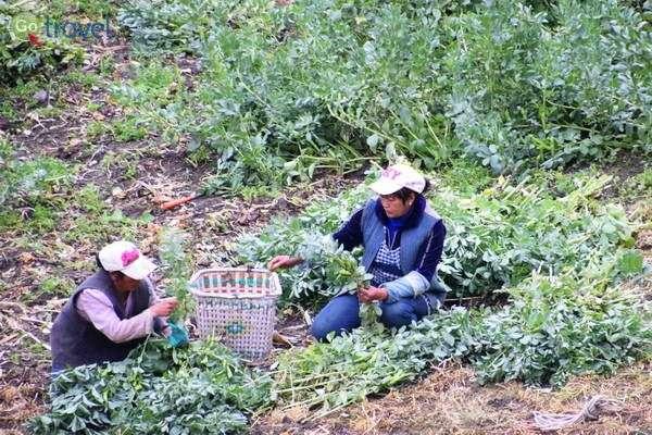 חקלאות זעירה בעבודת כפיים  (צילום: כרמית וייס)