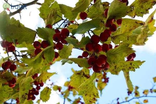 ממראות הסתיו  (צילום: כרמית וייס)