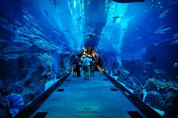 אקווריום דובאי מכיל מעל 300 מיני דגים ובעלי חיים ימיים (צילום: Mohammed J)