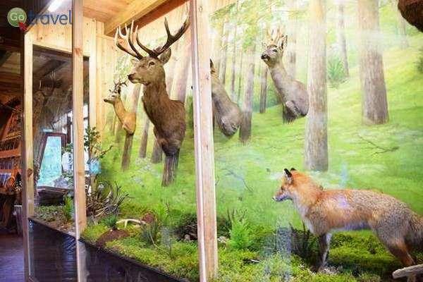 מוזיאון היער Girios Aidas  (צילום: כרמית וייס)