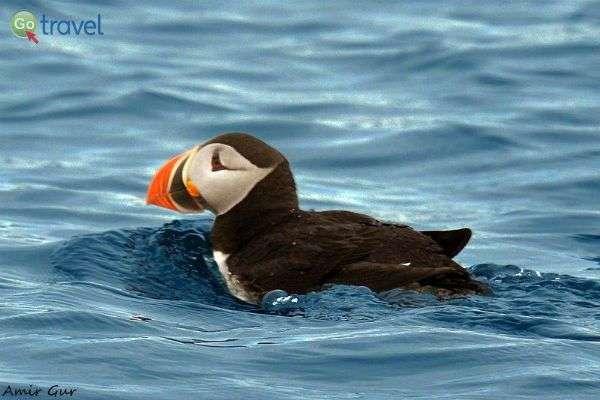 בקטבים עושר של בעלי חיים ועופות ימיים (צילום: אמיר גור)