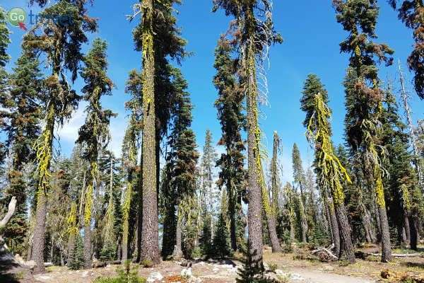 העצים כאן גדלים בריווח כדי להקטין תחרות (צילום: נטע קלימי עילם)