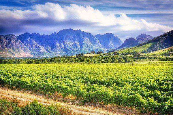 """כרמים ב""""ארץ היין"""" של דרום אפריקה (צילום: Albrecht Fietz)"""