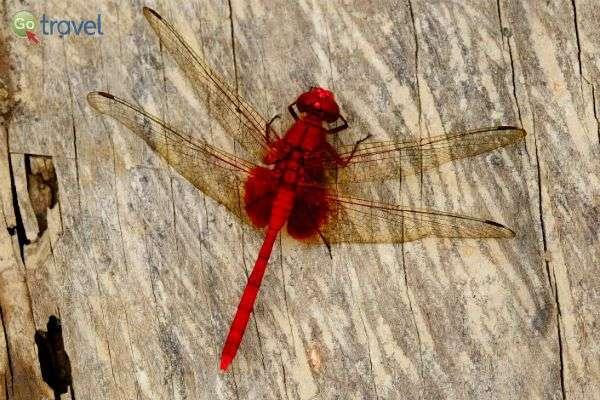 באמזונאס - אינסוף מיני חרקים (צילום: נעם סגן כהן)