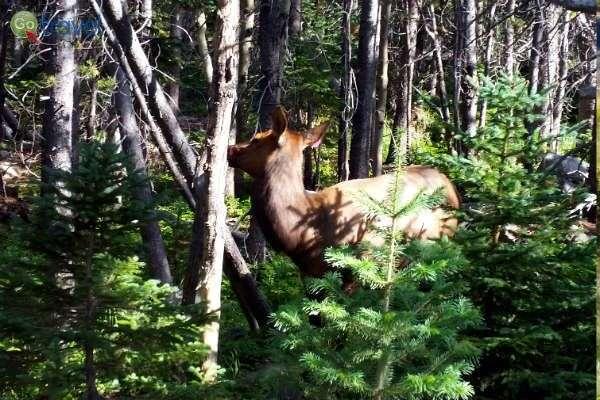 בשטח הפארק בעלי חיים רבים, רק צריך לפקוח עיניים ולחפש... (צילום: נטע קלימי)