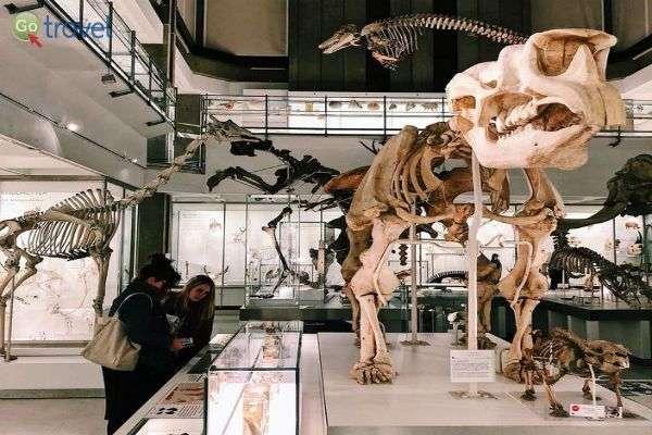 מוזיאון הזואולוגיה, קיימברידג' (צילום: יעל גתי)