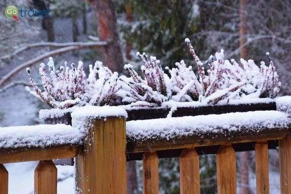 שלג כבד כיסה הכל בלבן  (צילום: כרמית וייס)