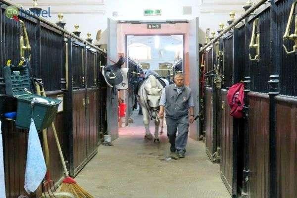 בסוף כל יום חוזרים לתא המפנק - הסוסים האציליים מתכוננים ללילה (צילום: תמירה צדקיהו-חסון)
