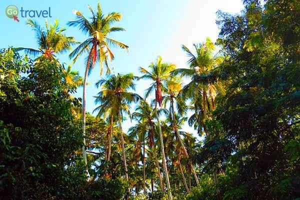 לשכב על הגב באי מבודד... (צילום: אמיר גור)