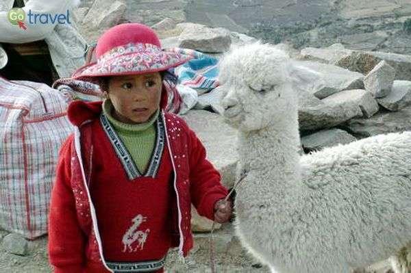 ילדה קטנה ואלפקה קטנה  (צילום: רוני זהבי)