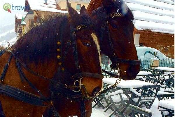 מי צריך רכב כשיש סוס ועגלה? (צילום: ליאת בן צור)
