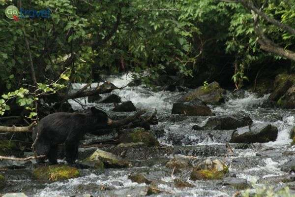 מפגש עם הדובים בנחל (צילום: עופר גלמונד)
