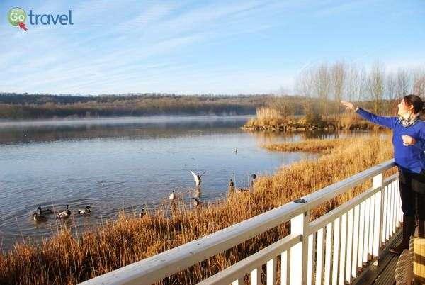 להאכיל ברווזים ממרפסת הבקתה - בילוי של בוקר  (צילום: כרמית וייס)