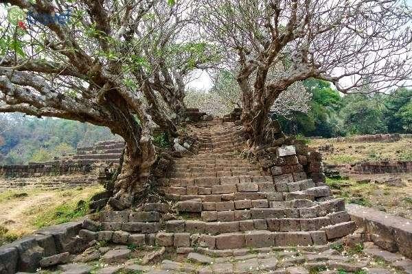 עצים מהאגדות במקדש ואט פהו (צילום: James Antrobus)