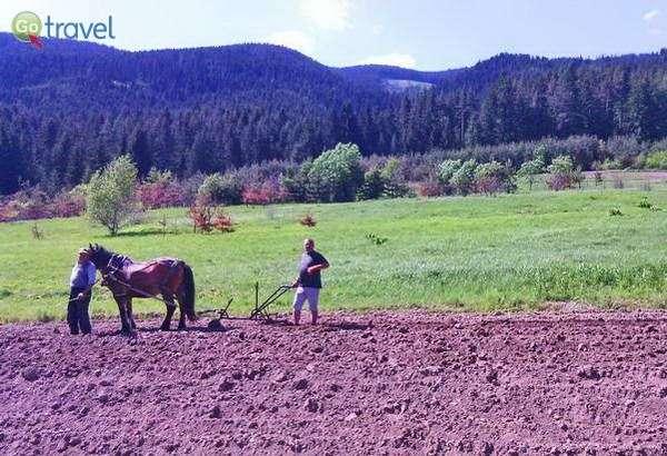 כך עדיין מעבדים את השדות  (צילום: ענבל שדה)