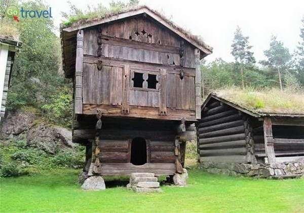 בתי עץ עתיקים בקריסטיאנסנד  (צילום: שלמה צדקיהו)