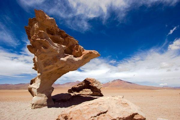"""""""עץ האבן"""" המפורסם (צילום: Christophe Roudet)"""