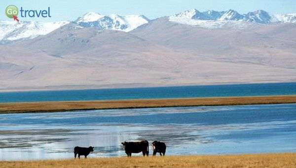 אגמים, הרים מושלגים וגם כמה פרות (צילום: מוש סביר)