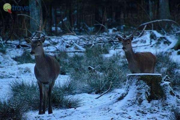 זוג איילים בפארק חיות הבר שכוסה שלג ראשון  (צילום: כרמית וייס)