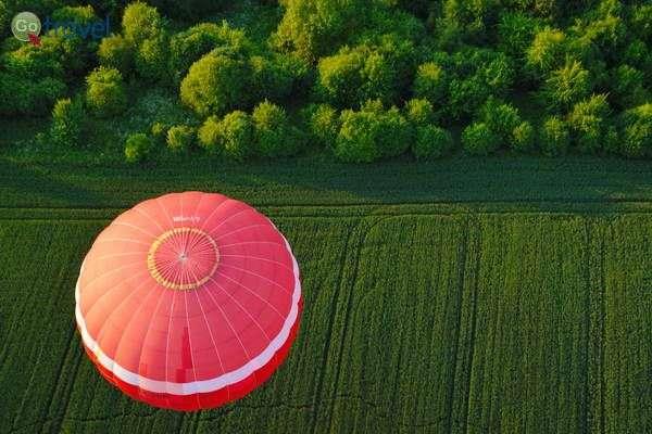 אינספור שדות ויערות וכדור פורח אחד  (צילום: כרמית וייס)