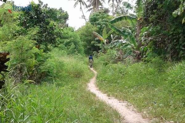 שבילי הליכה צרים מחברים בין הכפרים הקטנים שבג'ונגל  (צילום: יפעת סלע)