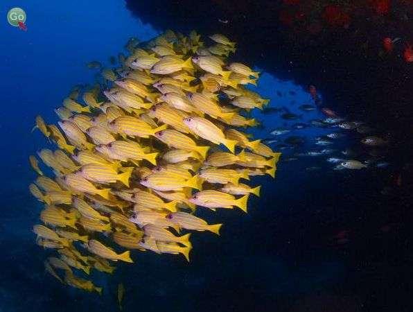 צלילה במלדיבים (צילום: אמיר גור)